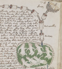 542Px-Voynich Manuscript Bathtub2 Example 78R Cropped