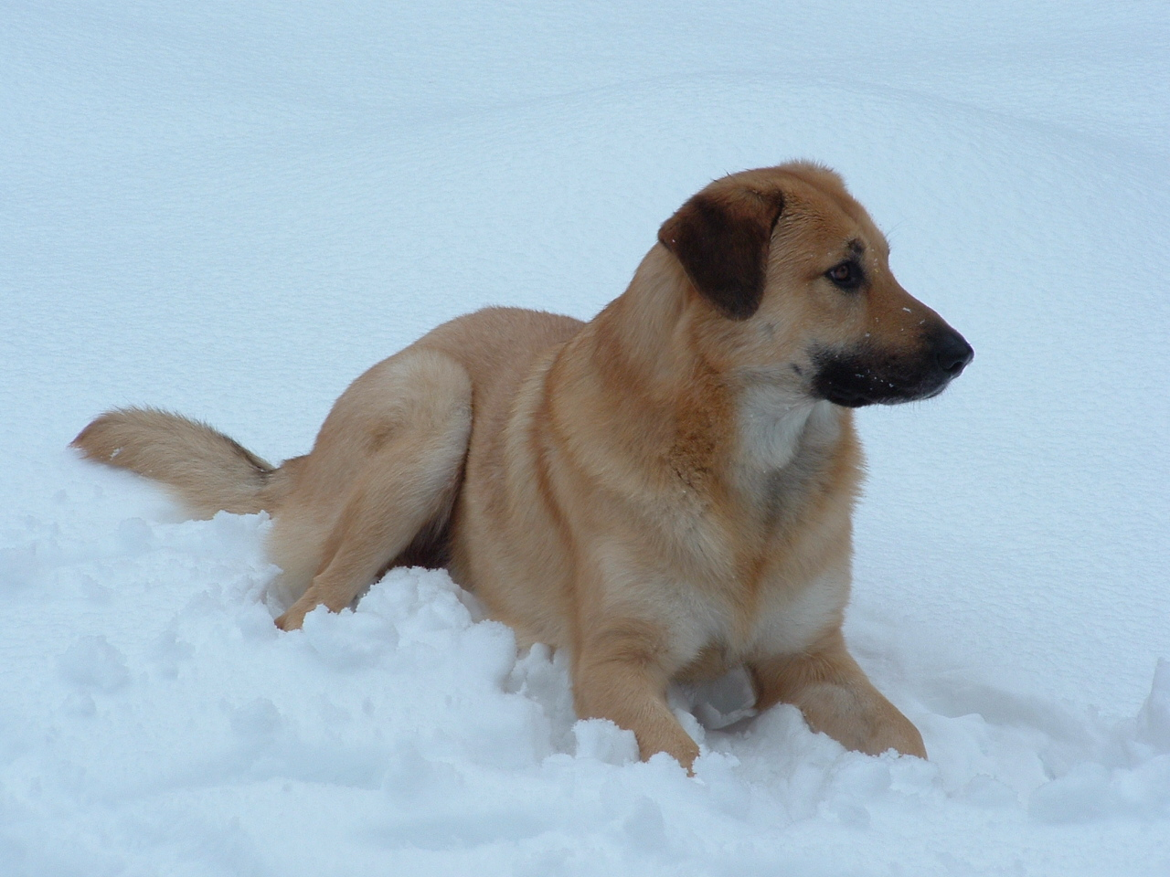 ... - And Names Rarest Dog Breeds Top 100 Dog Breeds Different Types Of