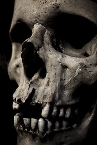 250Px-Skullclose