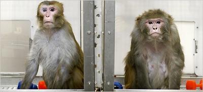 Scimmia Lab