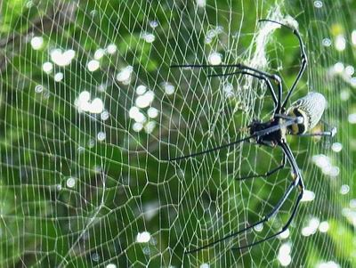 Spider In Web.Jpg