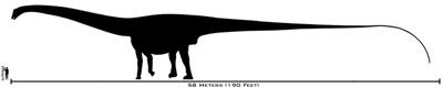 800Px-Human-Amphicoelias Size Comparison