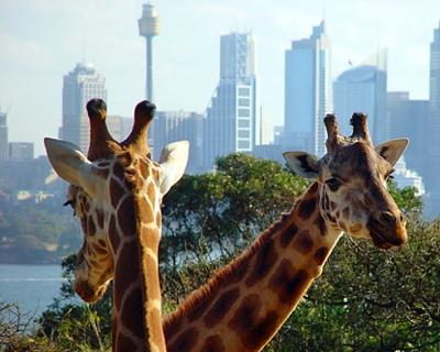 Australia-Taronga-Zoo