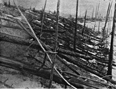 781Px-Tunguska Event Fallen Trees
