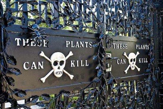 Alnwick-Poison-Gardens.2289.Full