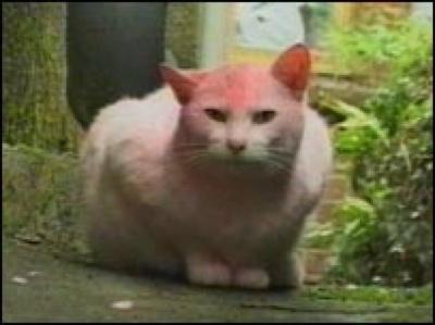 40765254 Pink Cat I 203