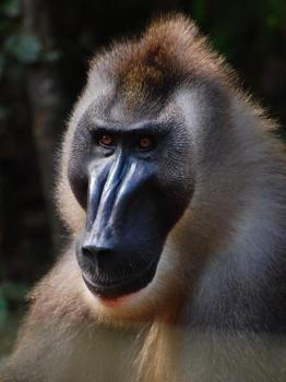 Drill-Monkey