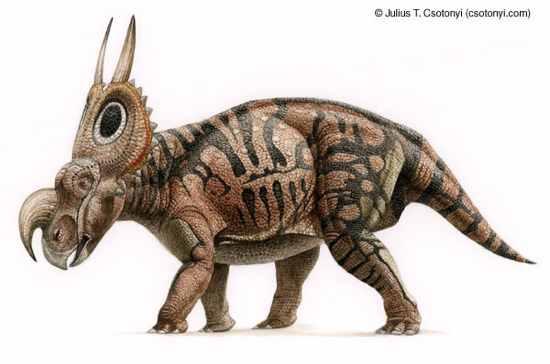 Ig59 Einiosaurus 02