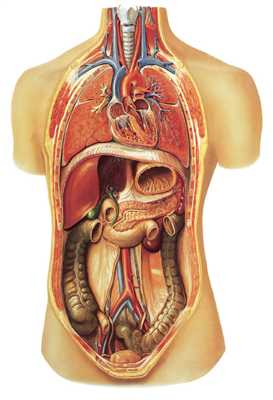 Internal Organs