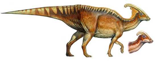 10-Parasaurolophus-Walkeri