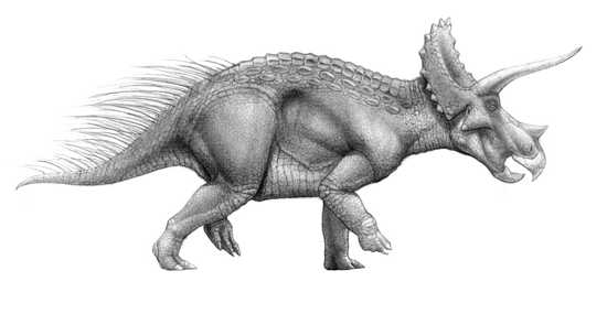 Triceratops