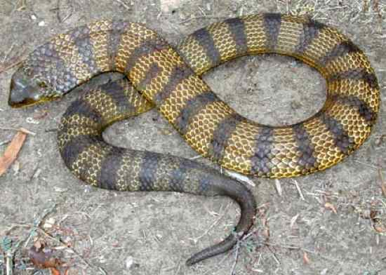 tiger-snake-reef-lodge-townsville-backpakers
