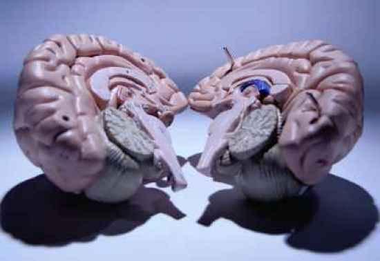 Otak-(Thinkstock)-Depan