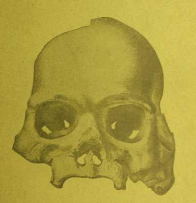 04Calaverasskull