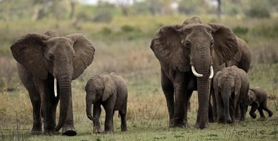 tanzania_elephants3_wide-89ec72768201f486a5f48ed78f73fcd91389e45f