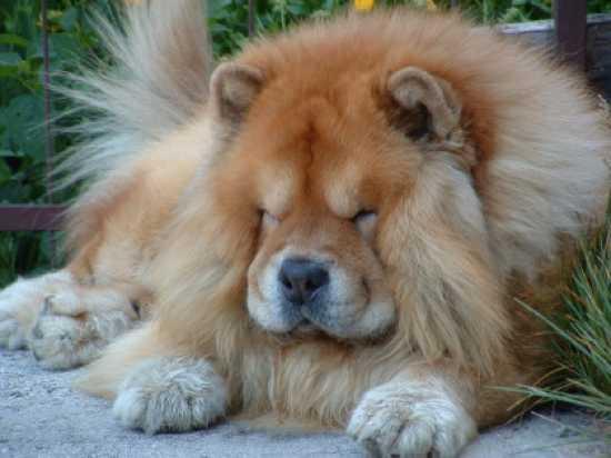 Top 10 Deceptively Dangerous Dog Breeds - Listverse