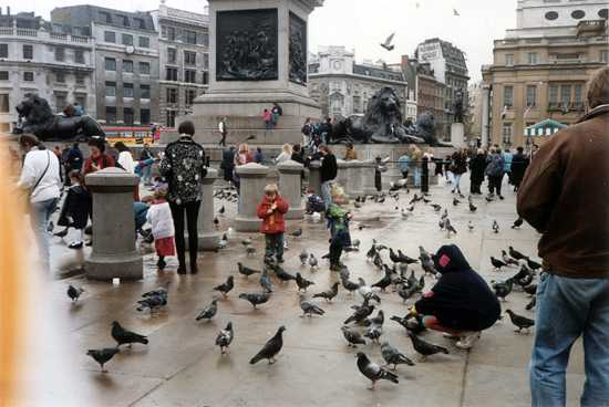 People Feeding Pigeons In Trafalgar Square C
