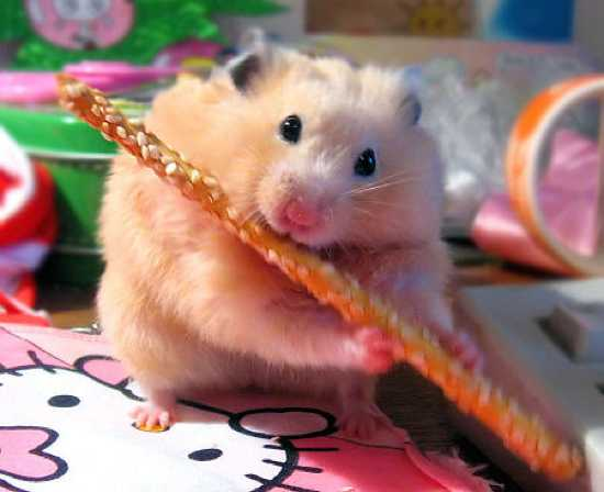 Funny Hamsters Picture 52