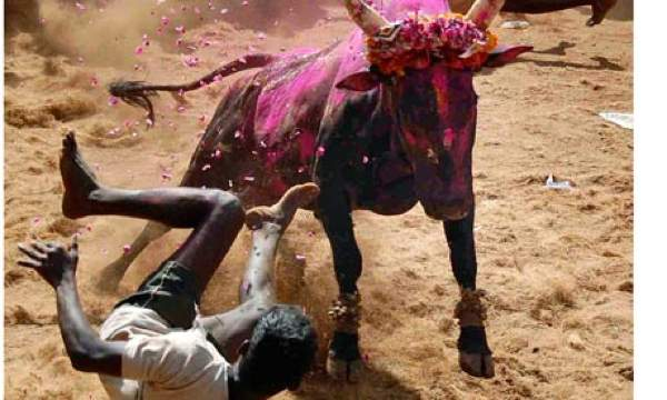 Jallikattu-A-Bull-Taming--006
