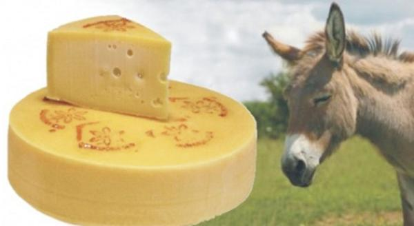 Most-Expensive-Cheese-Made-From-Donkey