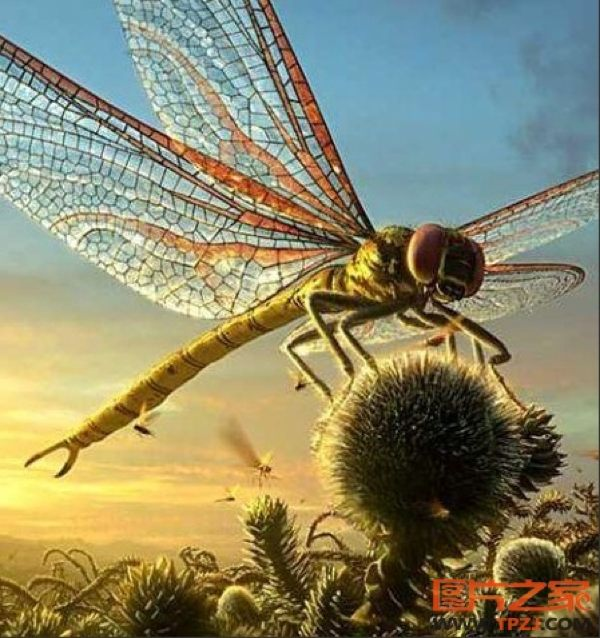 Giant prehistoric dragonfly