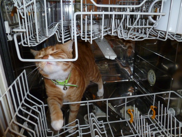 Dishwasher Cat