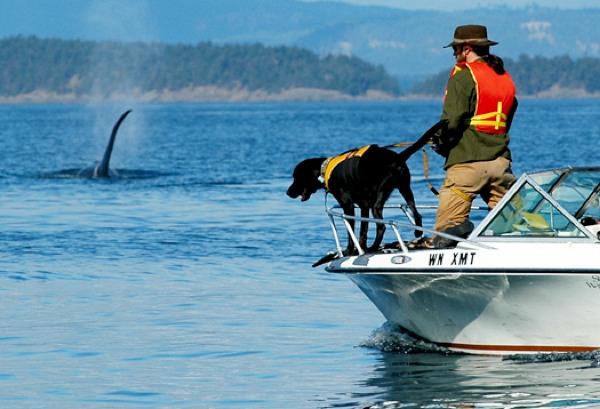 Dog Boat 525-1