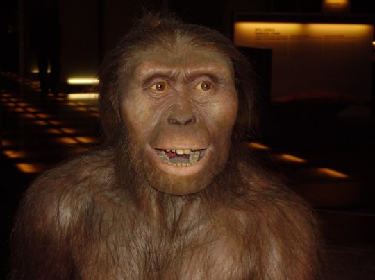 Australopithecus Afarensis