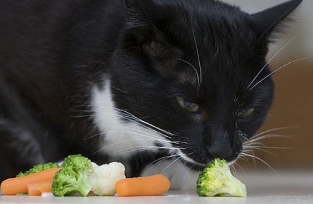 Veggie-Cat 1383200A