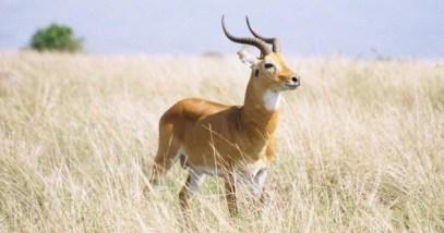 antelope-e1373792116240