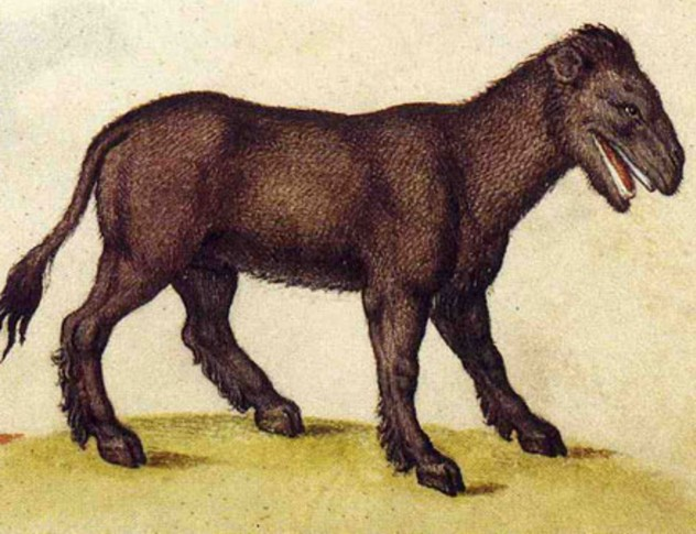 Leucrocuta, medieval illustration
