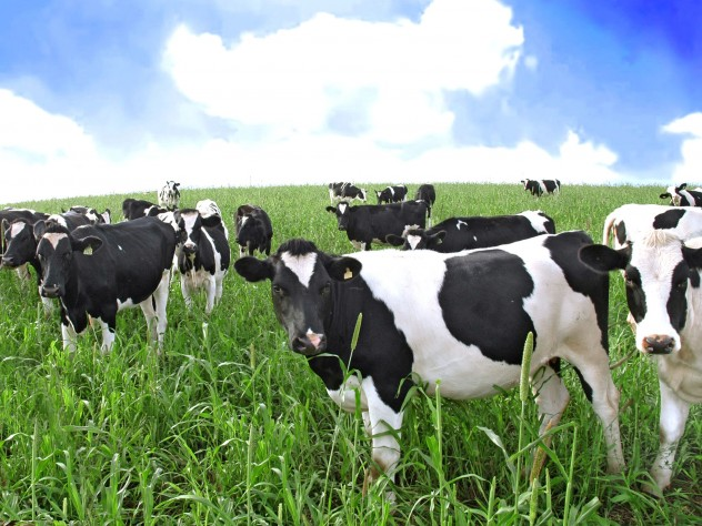 filepicker_HHHtwpoSnlKel9hhVKAr_cows