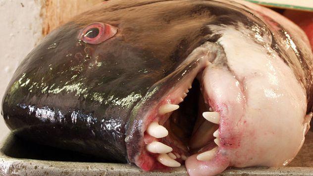 Fishmarket_01