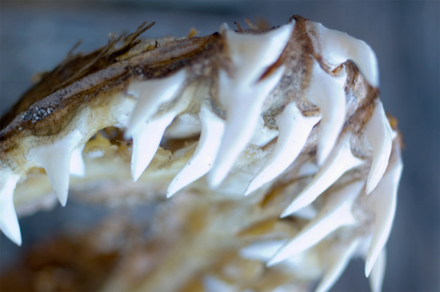 1- swallower