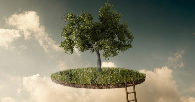 featured trees2