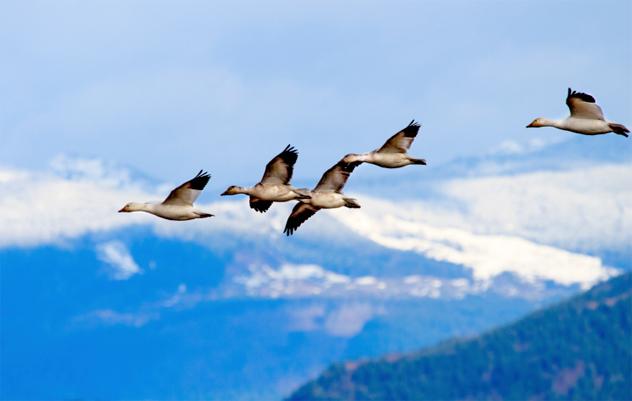 6- birds