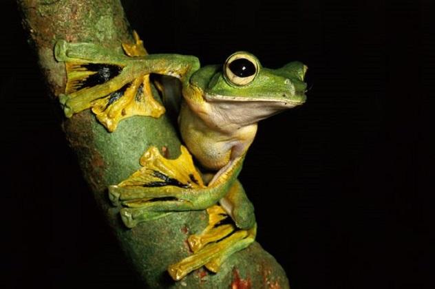 flying-frog_527_600x450