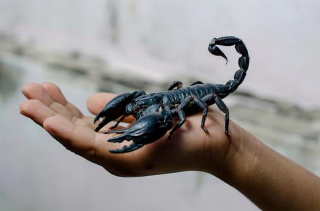 2- scorpion