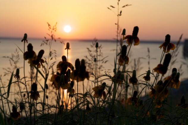 Waco lake flowers