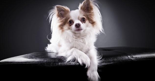 Small-dog-e1412089033973
