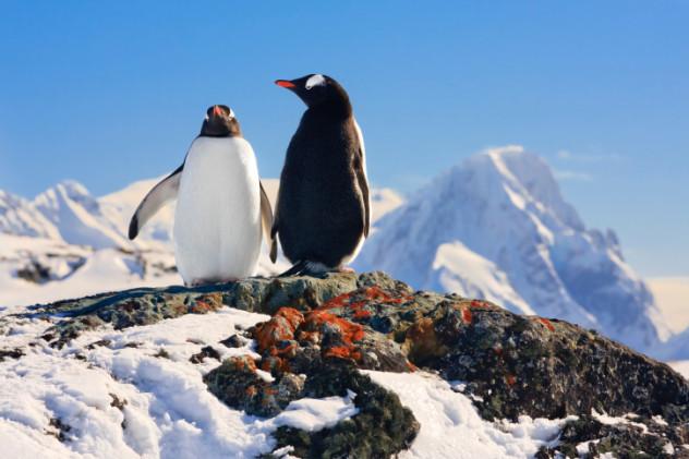 2 south pole