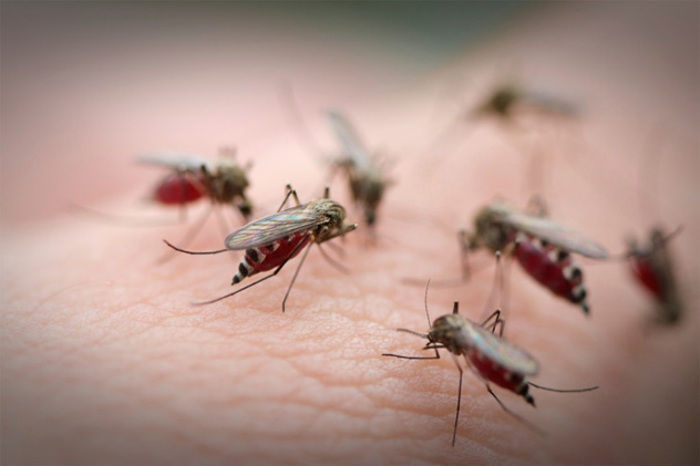 7- mosquito