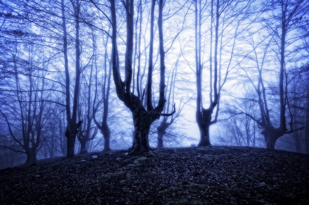 3 forest