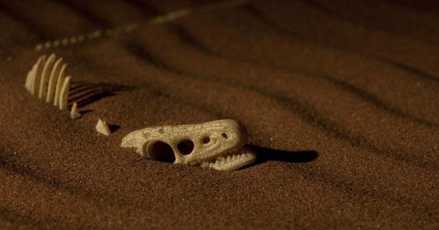9-skeleton-e1422474030192