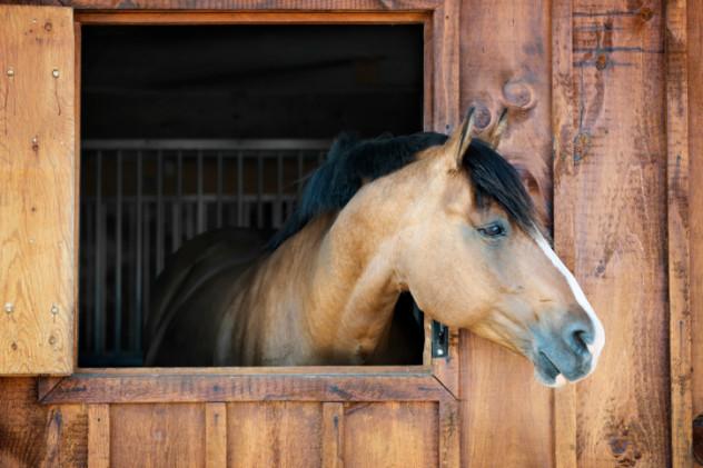 tetanus horse