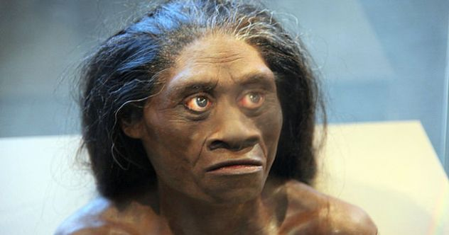 640px-Homo_floresiensis_adult_female_-_model_of_head_-_Smithsonian_Museum_of_Natural_History_-_2012-05-17