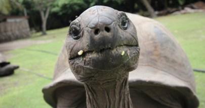 Turtle_FI