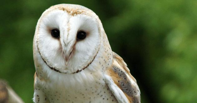 owlyface