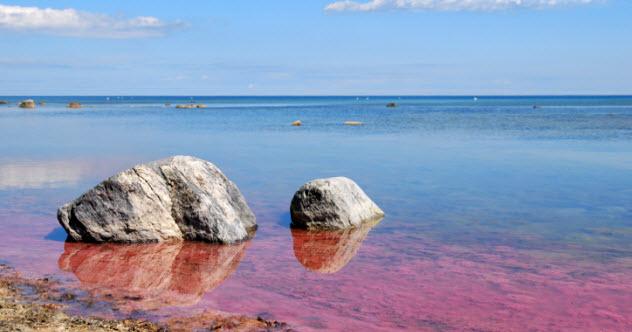 8-algae-bloom-151933561
