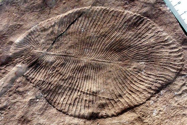 9-cambrian-explosion